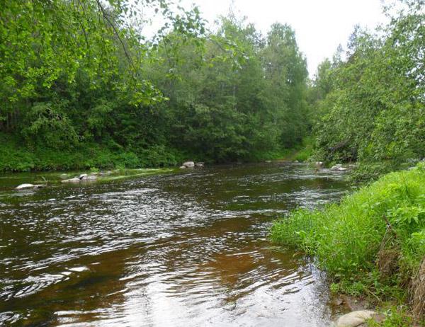 икра голавля бывает в таких речках
