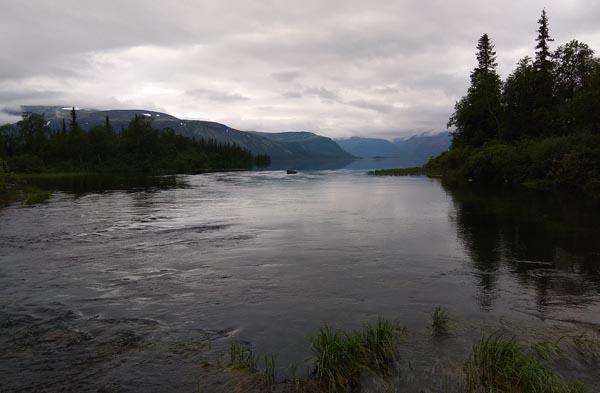 лосось в реке на спиннинг
