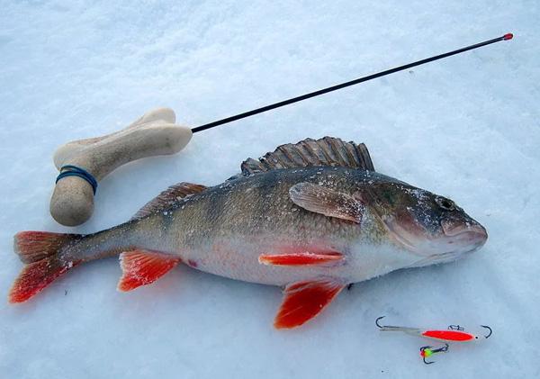 Лучшие способы ловли окуня зимой